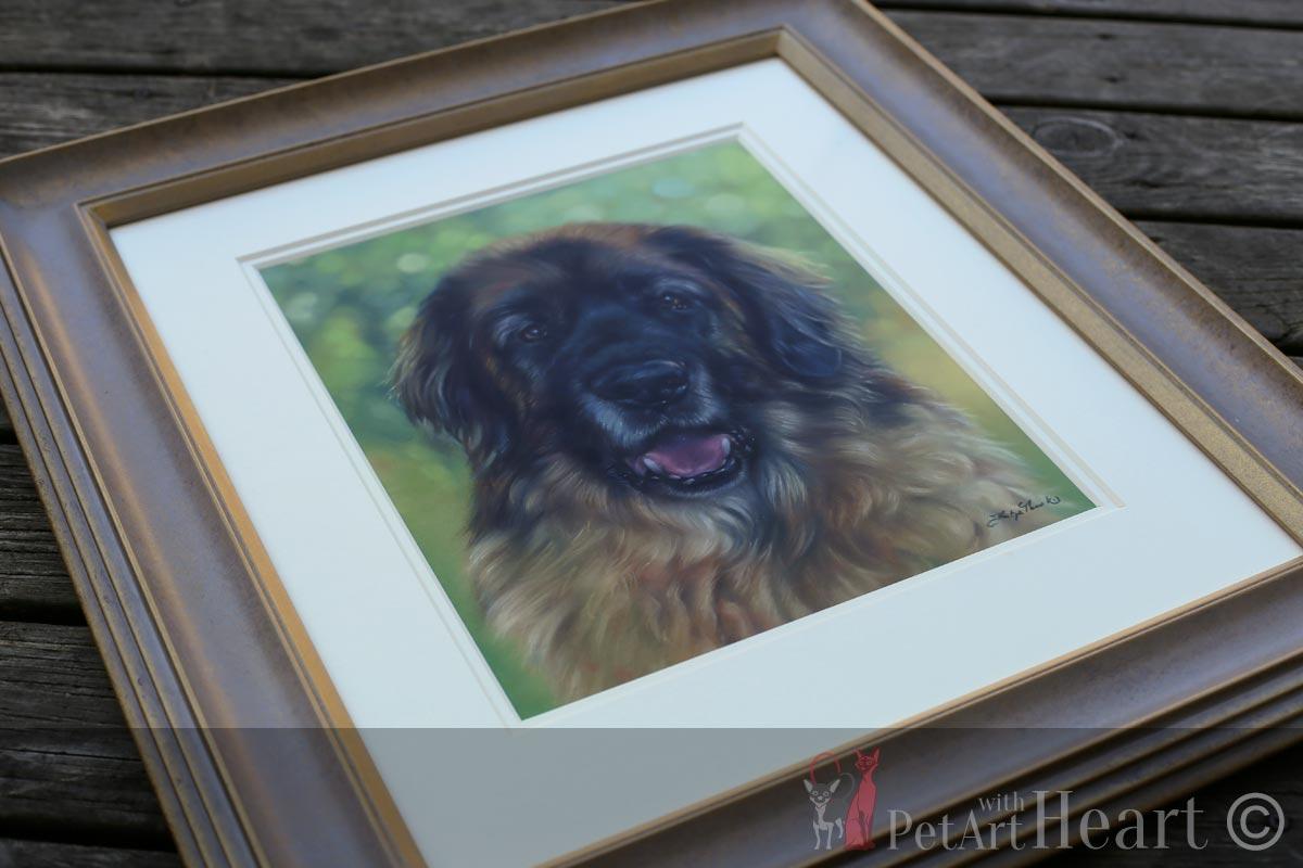 framed leonberger pastel portrait