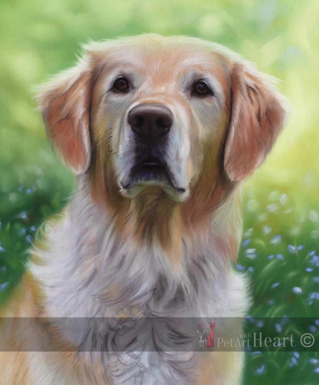 pet portrait pastel golden retriever