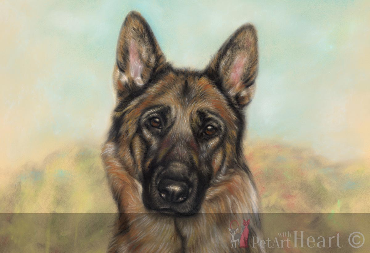 pastel drawing german shepherd Izzy