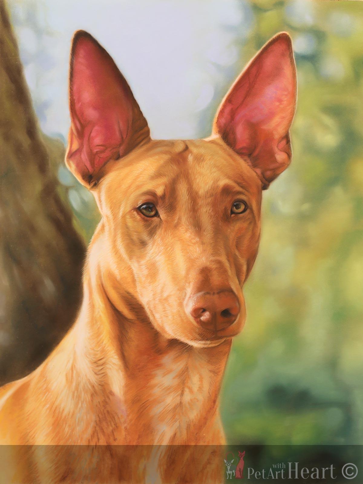 Pastel portrait Pharaoh hound