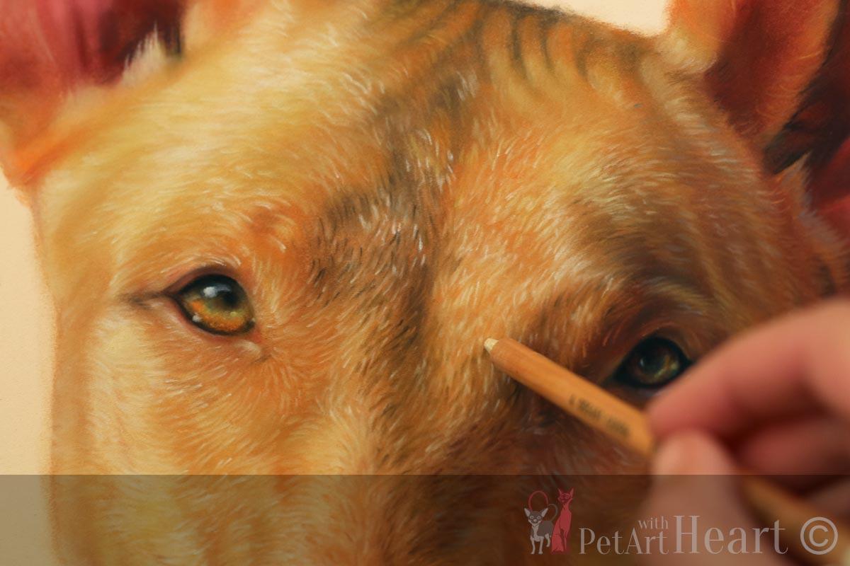 pharaoh hound pastel portrait