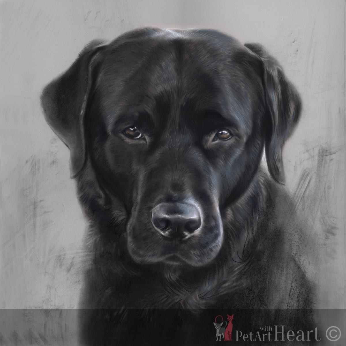 pet portrait labrador Klas in pastel