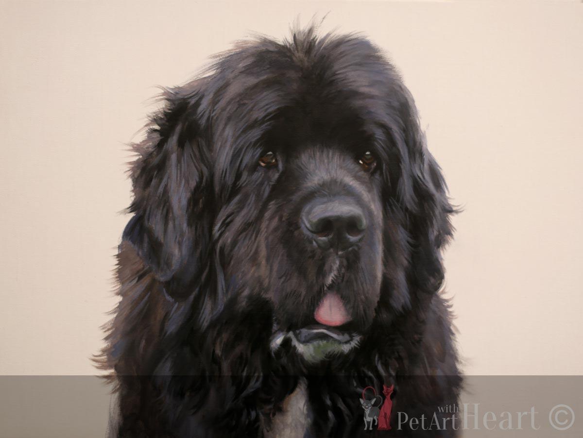 newfoundland dog pet portrait progress blocking in stage