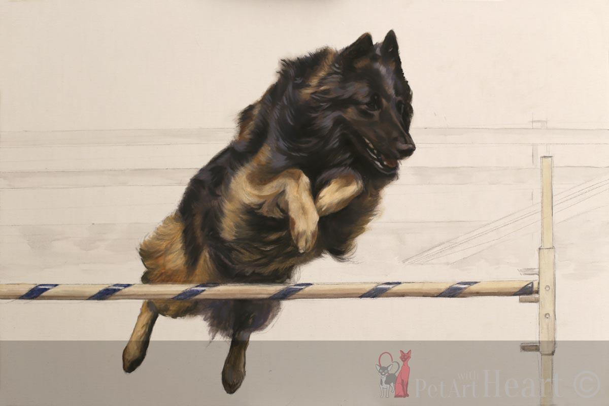 blocking in agility dog