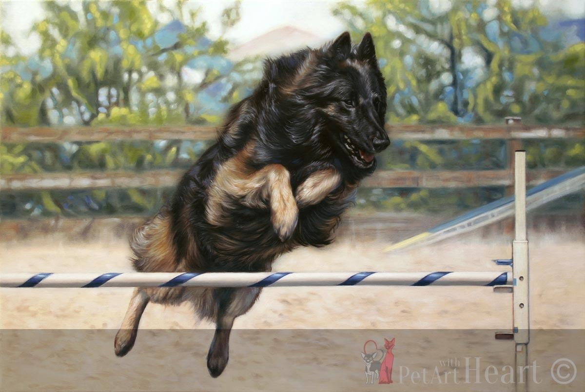 pet portrait oil agility tervueren