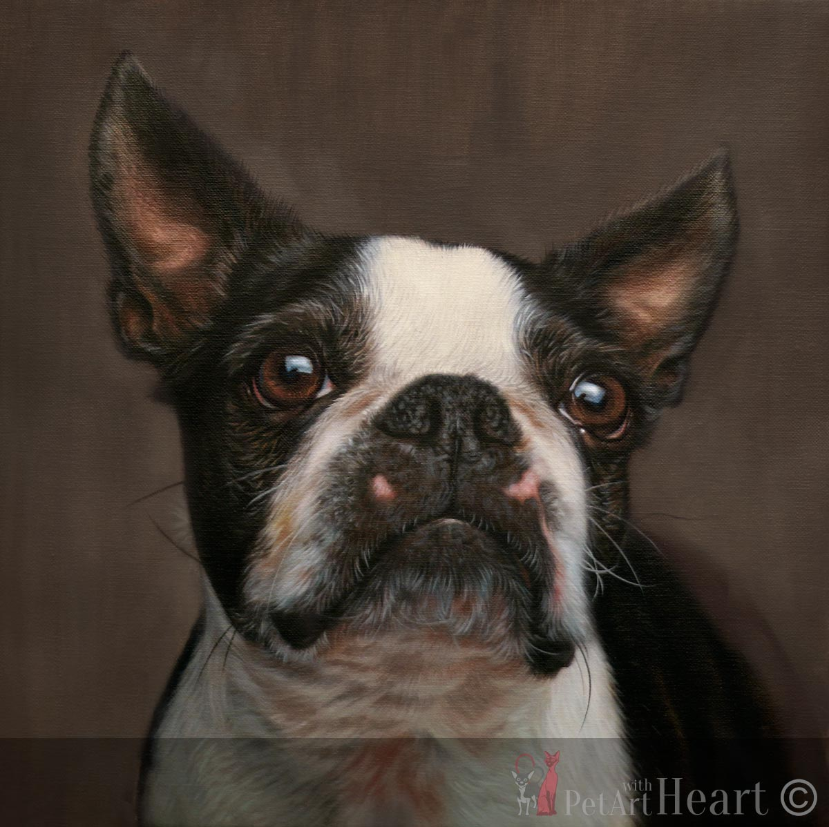 pet portrait oil boston terrier