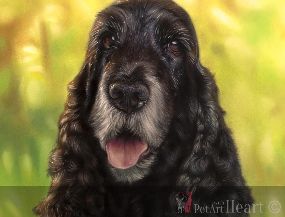 pet portrait pastel cocker spaniel