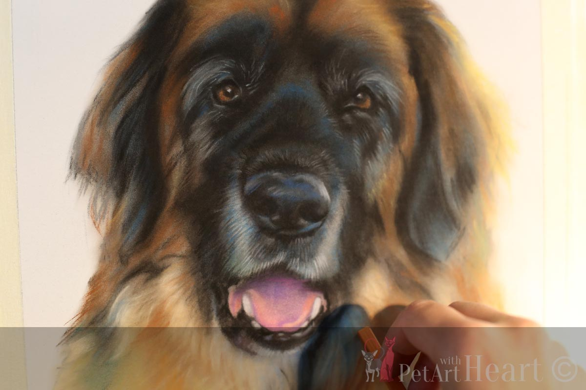 Leonberger Portrait in Pastel