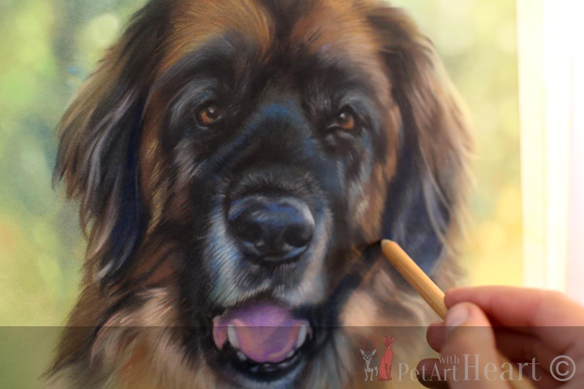 LLeonberger Portrait in Pastel