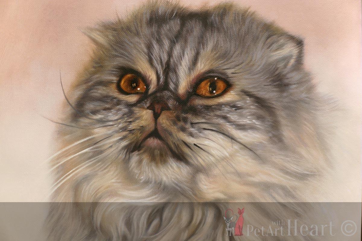 pet portrait scottish fold cat portrait oils
