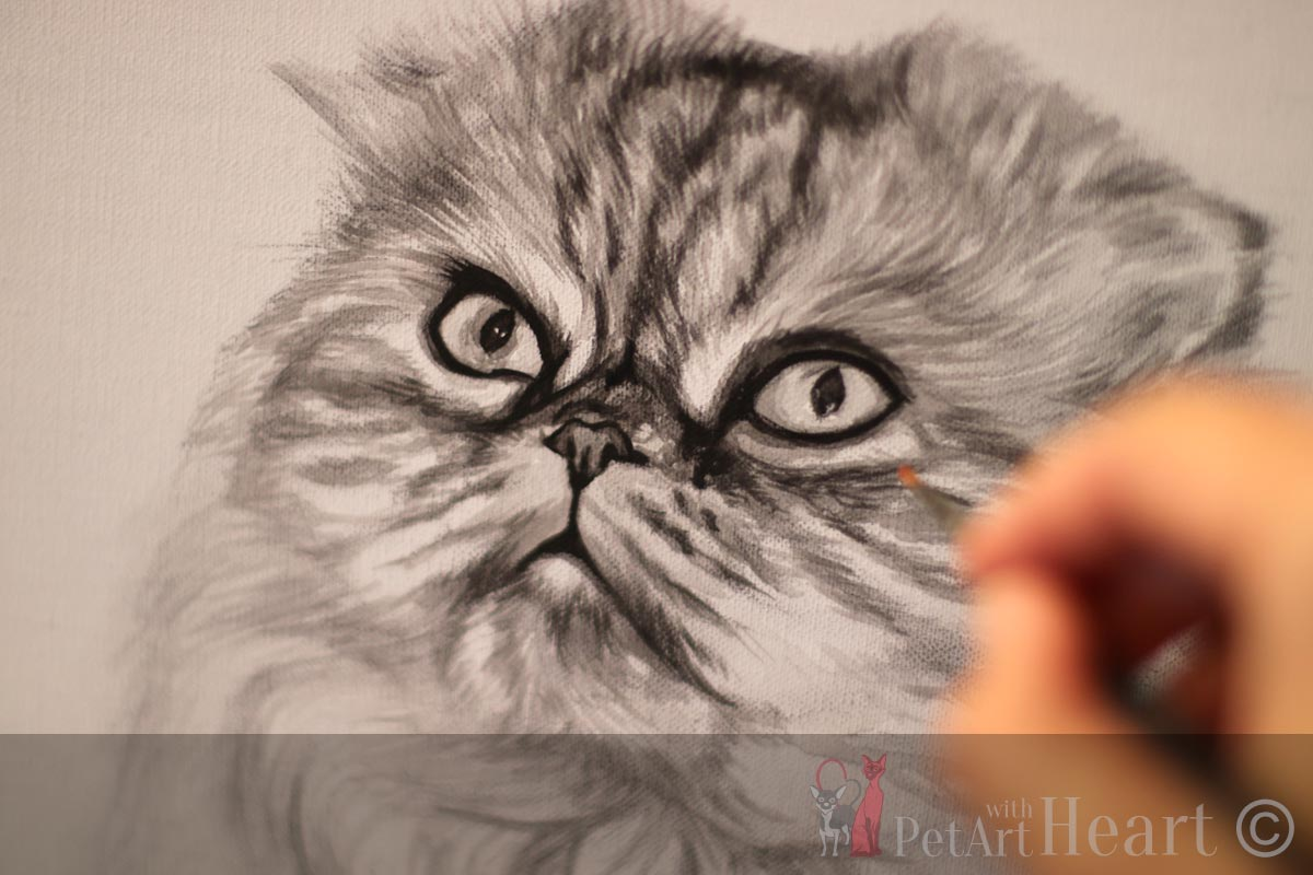 scottish fold cat portrait in oils