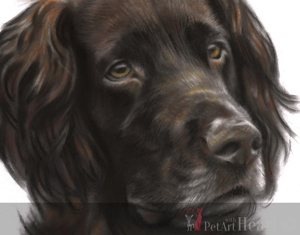 dog portrait pastel faxe