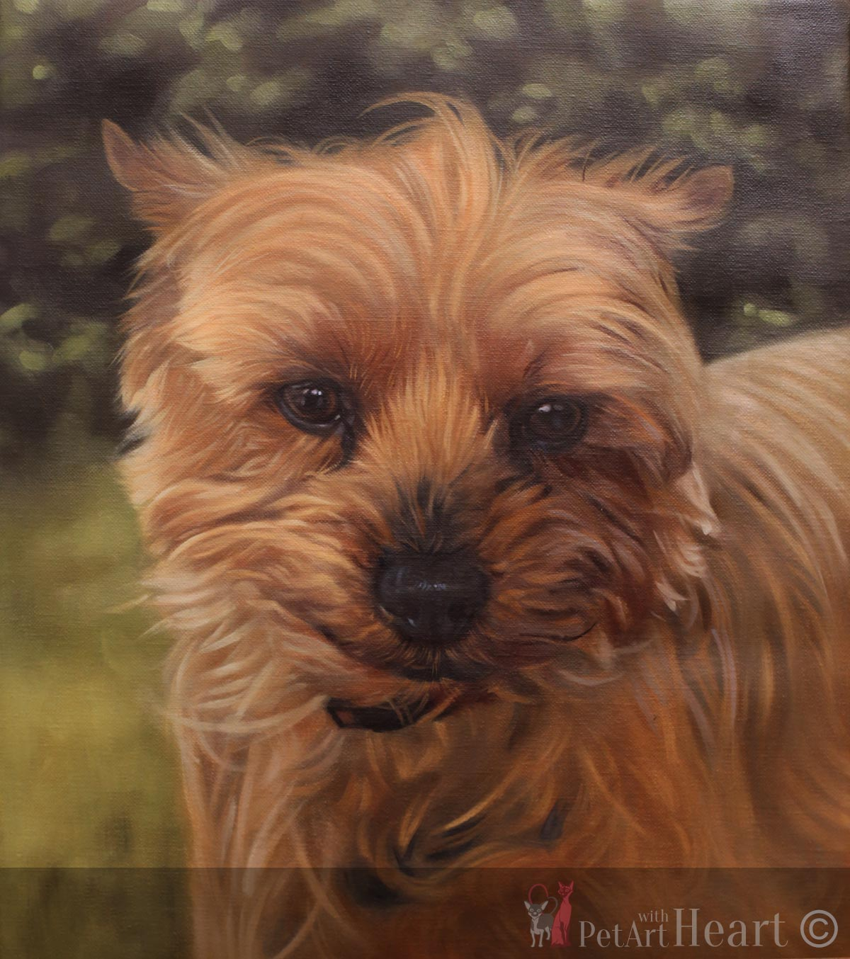dog oil portrait progress