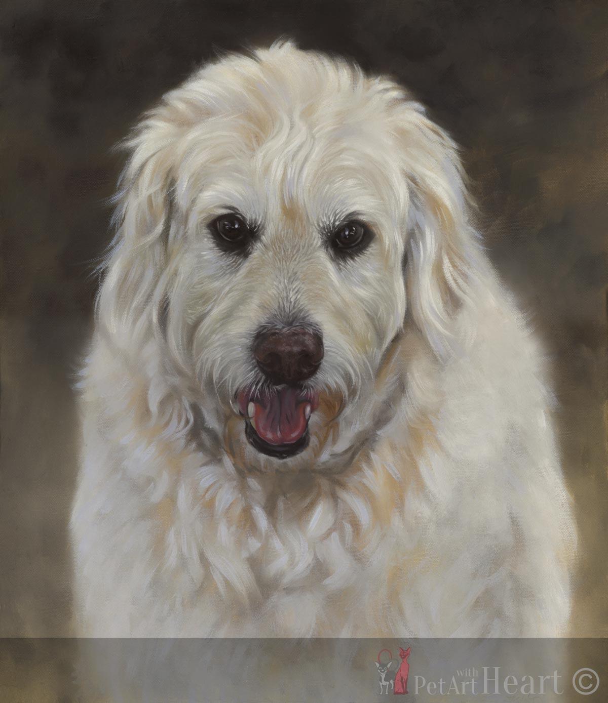 Dog portrait in oils Oliver