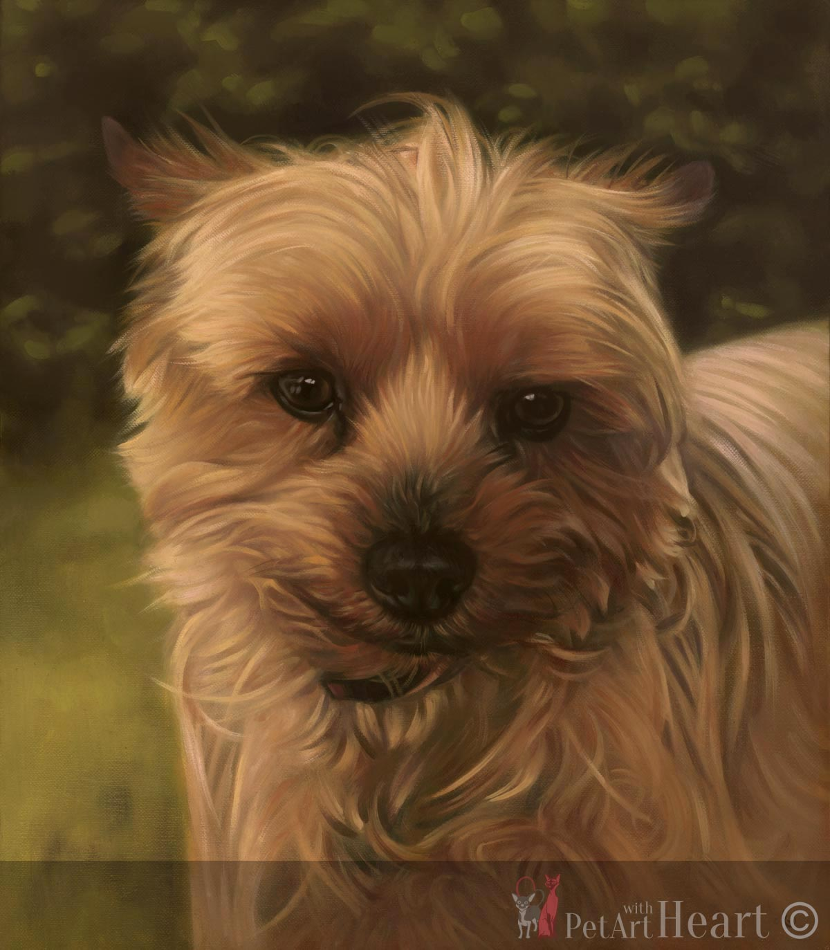 Oil portrait Yorkshire Terrier