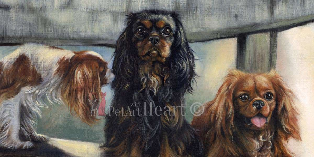 Cavalier King charles spaniels Close-up