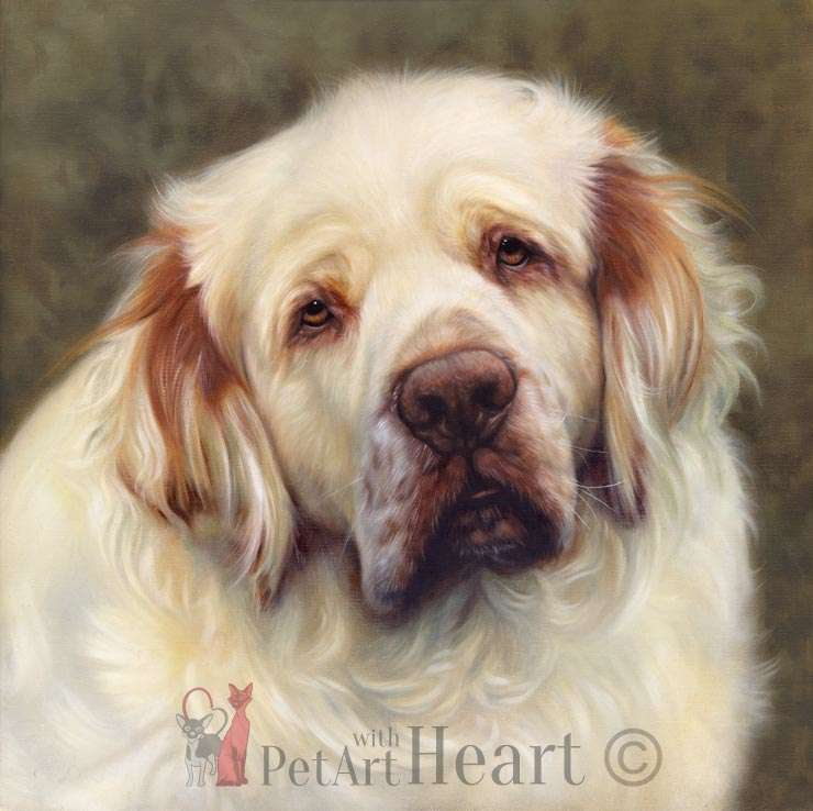 Clumber Spaniel portrait in oils Duncan