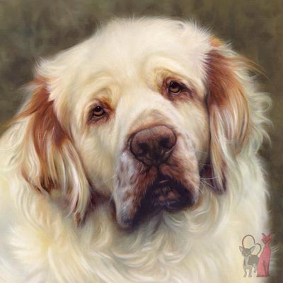 Clumber spaniel paintings Duncan