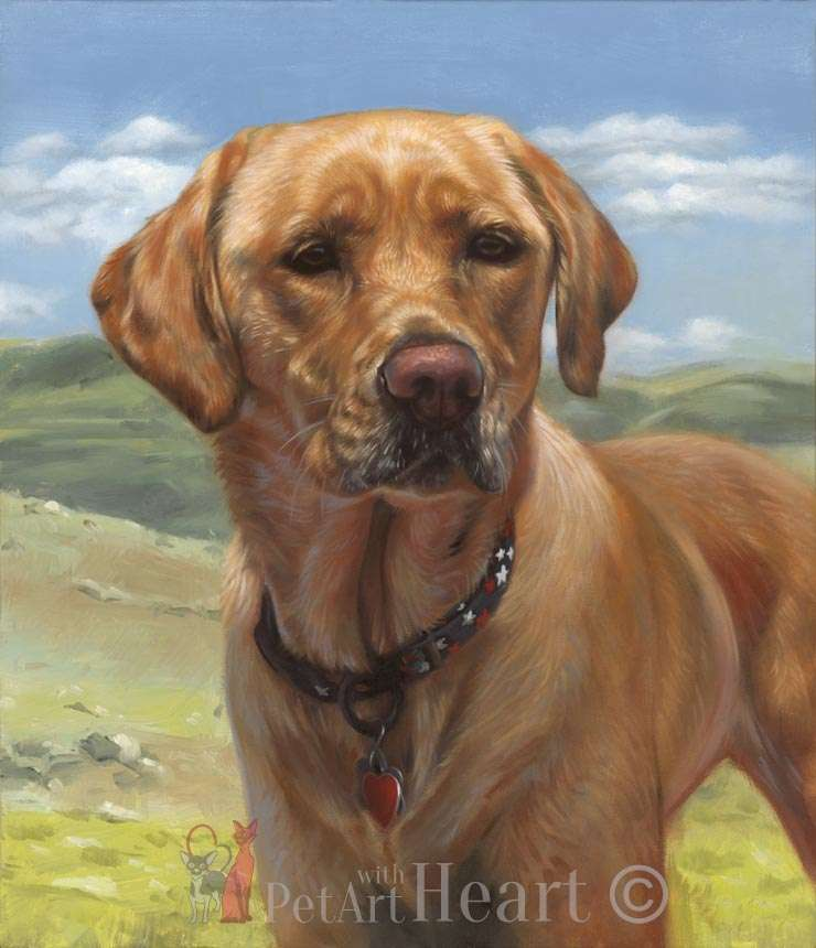 Labdrador retriever portrait in oils Mazie
