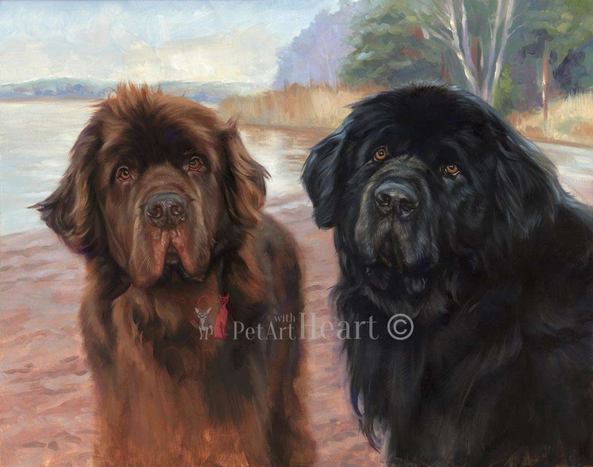 Newfoundland dogs in oils