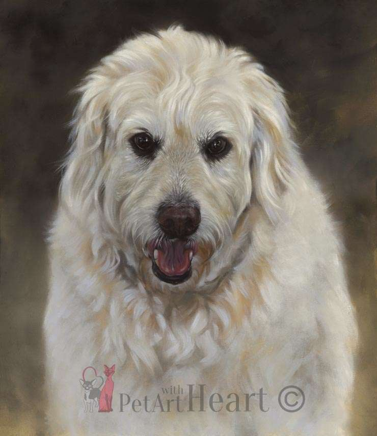dog portrait in oils Oliver