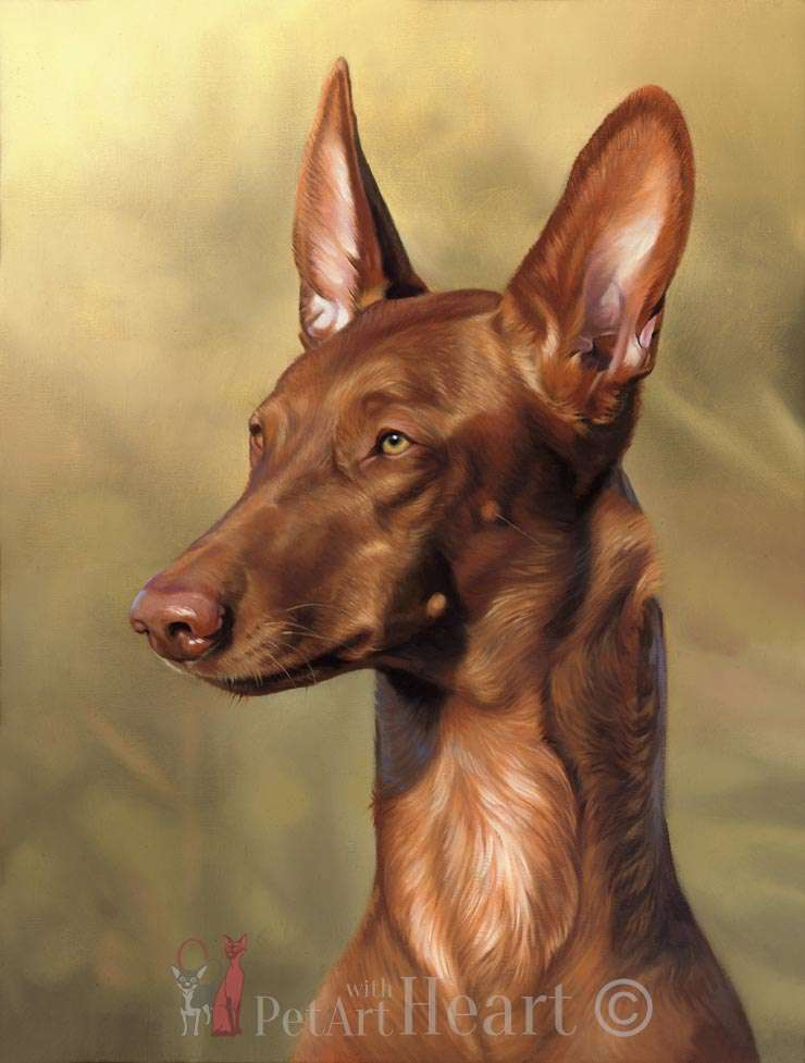 Pharaoh Dog portrait in oils Vilda
