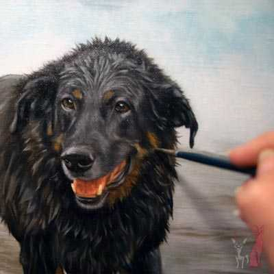 pet portrait progress oil Buster