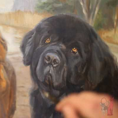 pet portrait progress oil Nalle, Azlan
