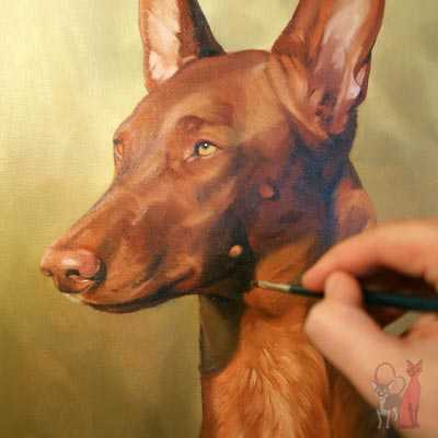 pet portrait progress oil Vilda
