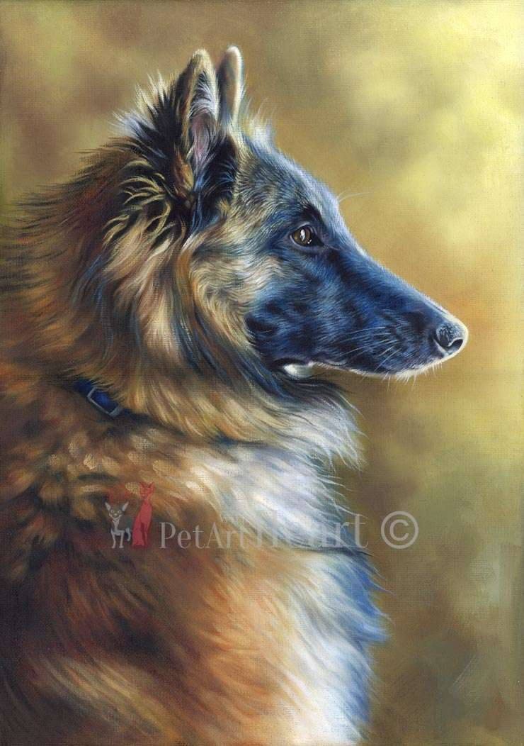 Tervueren Dog portrait in oils Wolfgang