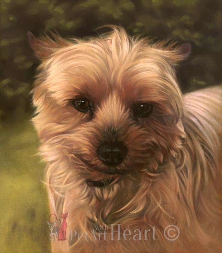Yorkshire Terrier portrait in oils Ferguson