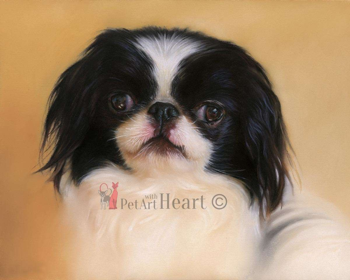 chinese chin in pastel