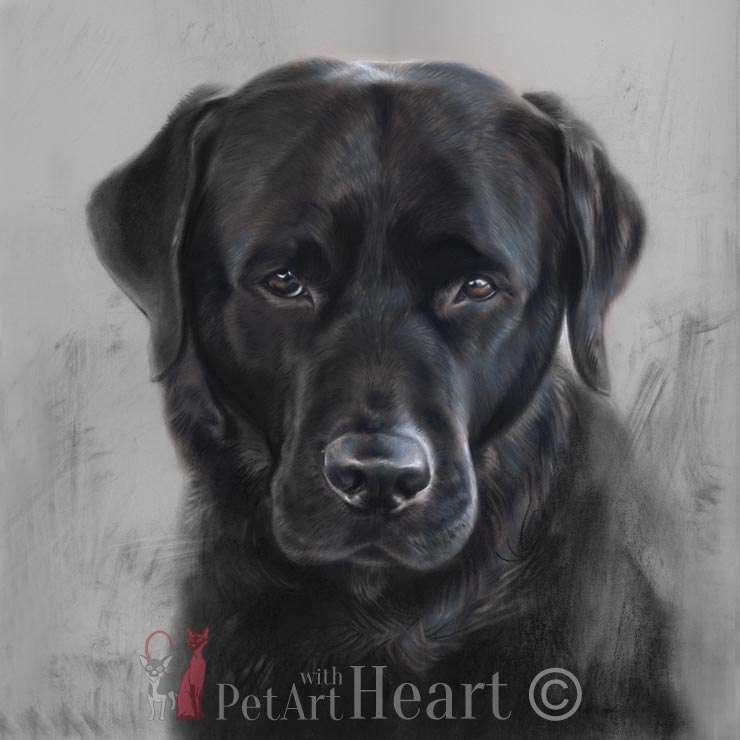 Black labrador retriever in pastel Klas