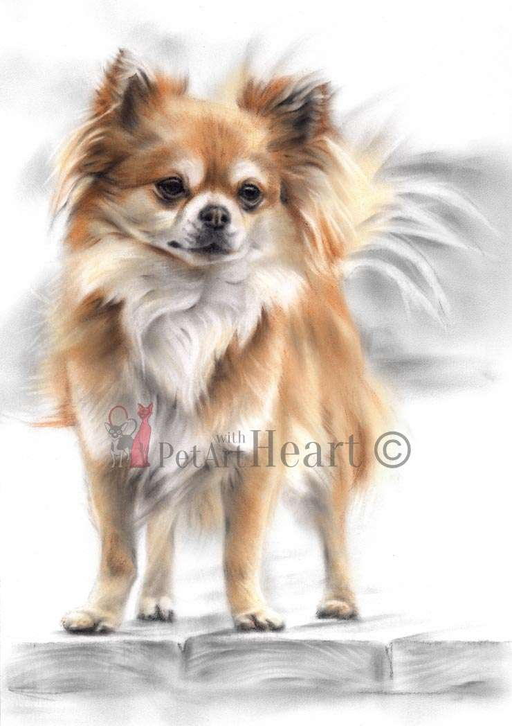 Chihuahua in pastel Enyo