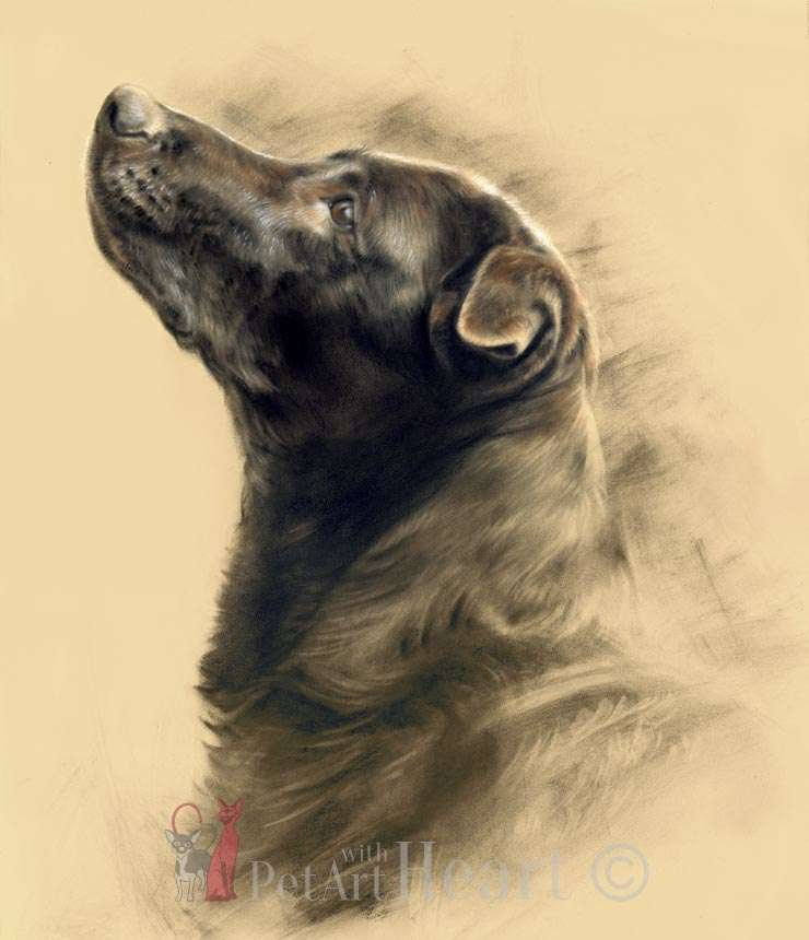 Labrador Retriever in pastel Jesse