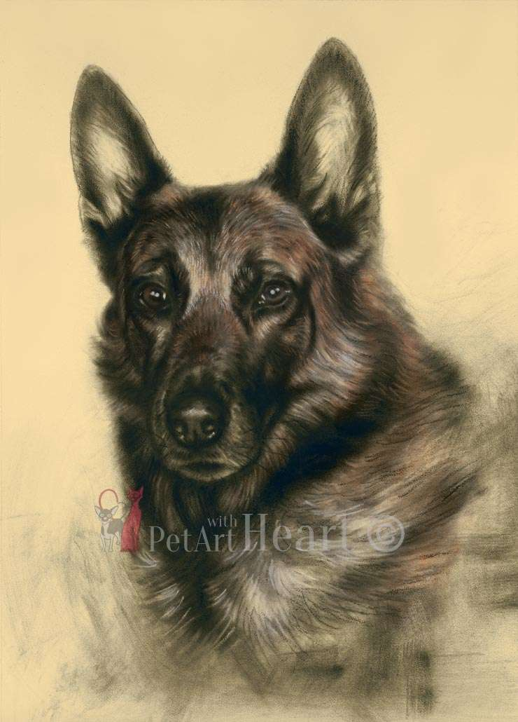 Malinois in pastel Vachs