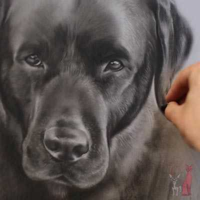 pet portrait progress pastel Klas