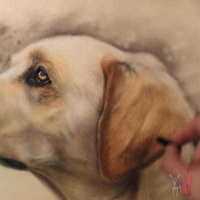 pet portrait progress pastel Rookie