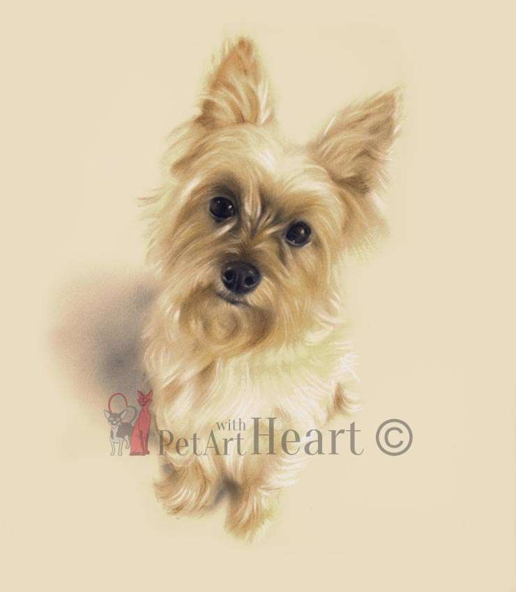 Terrier dog in pastel Dunkin