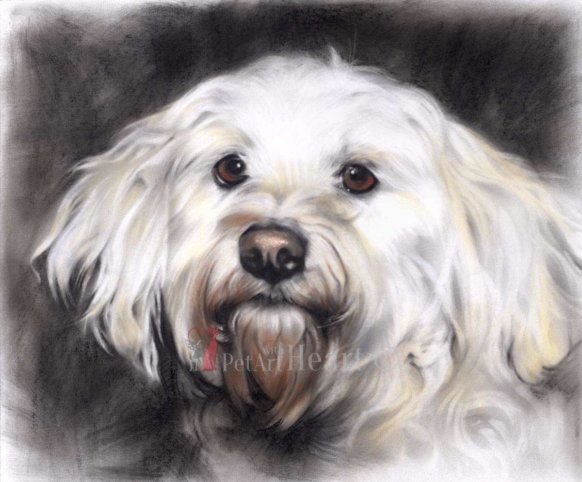 White dog in pastel