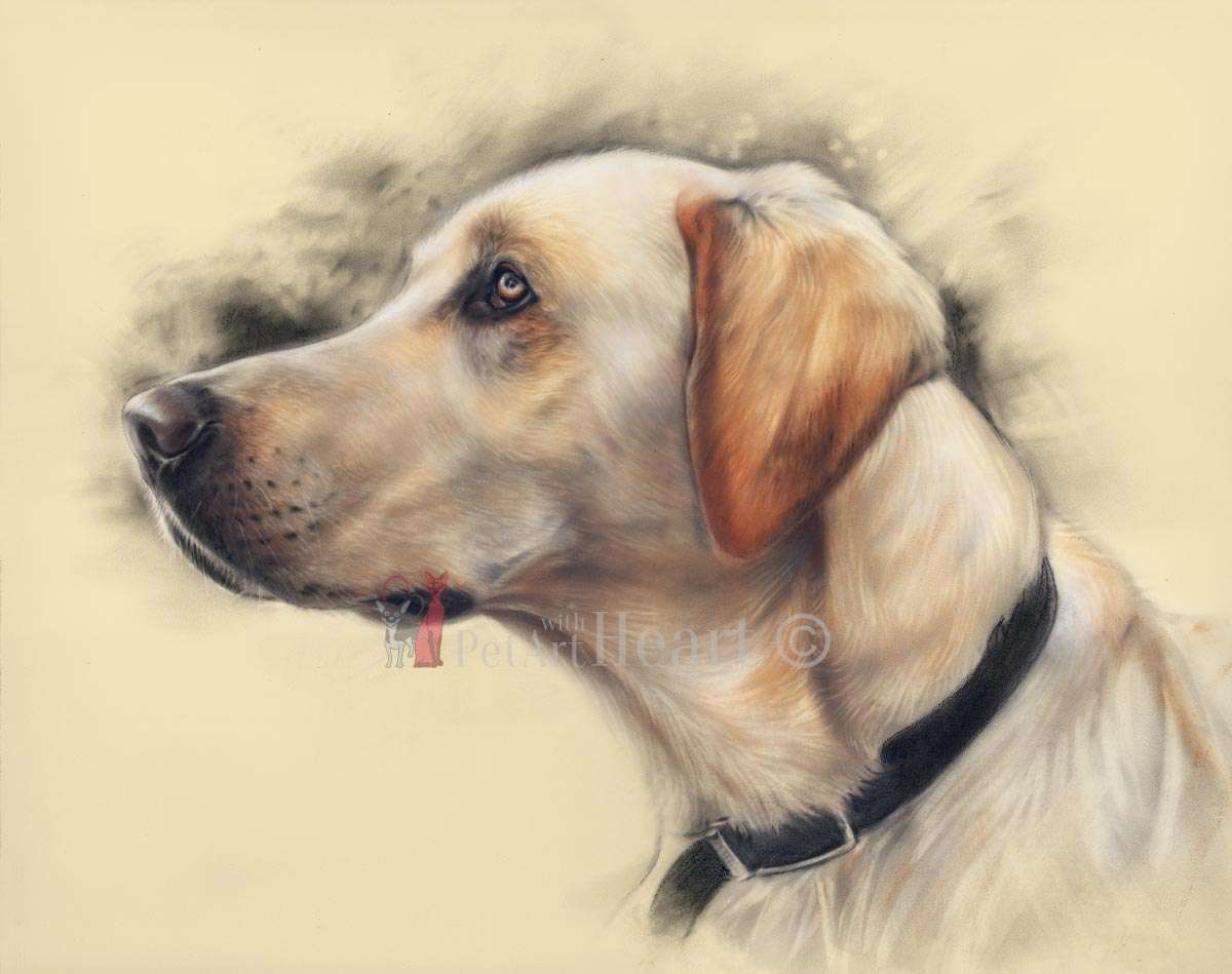 labrador retriever in pastel Rookie